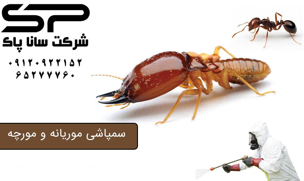 سمپاشی موریانه و مورچه