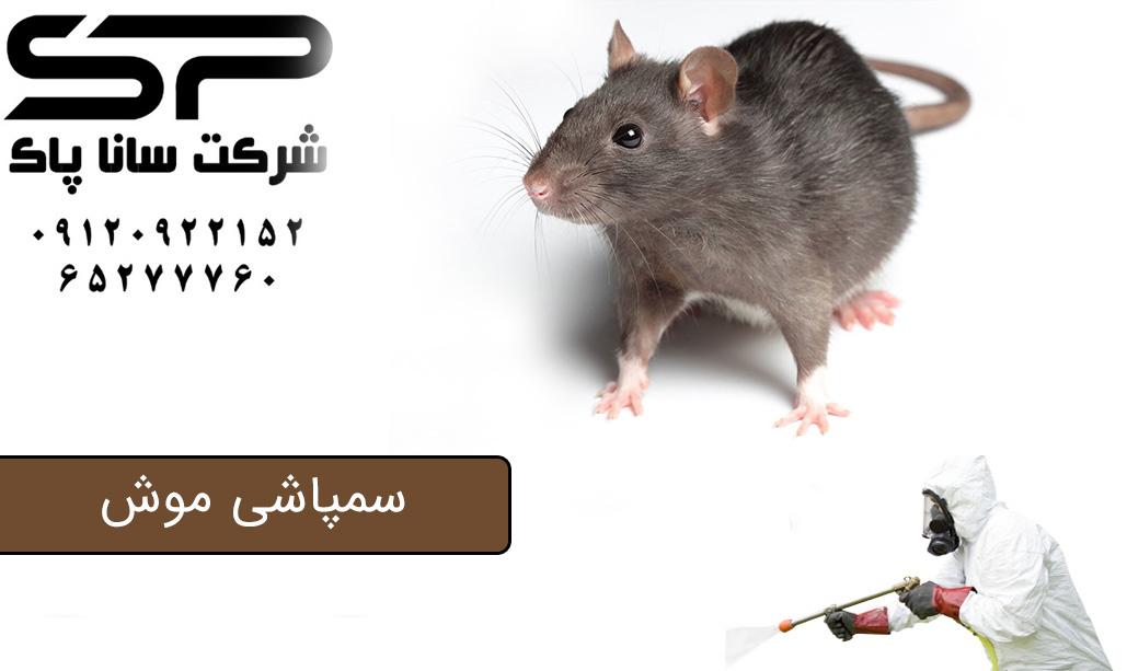 سمپاشی وطعمه گذاری موش